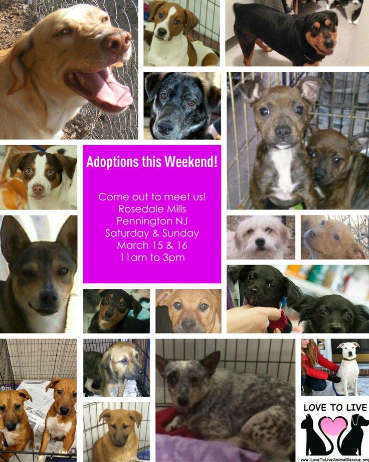 10e130afaf74fe222a9c0d4771142897 pet adoption events pets
