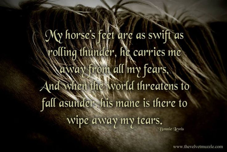 Cute Horse Quotes: 29 Best Cute Horse Sayings Images On Pinterest