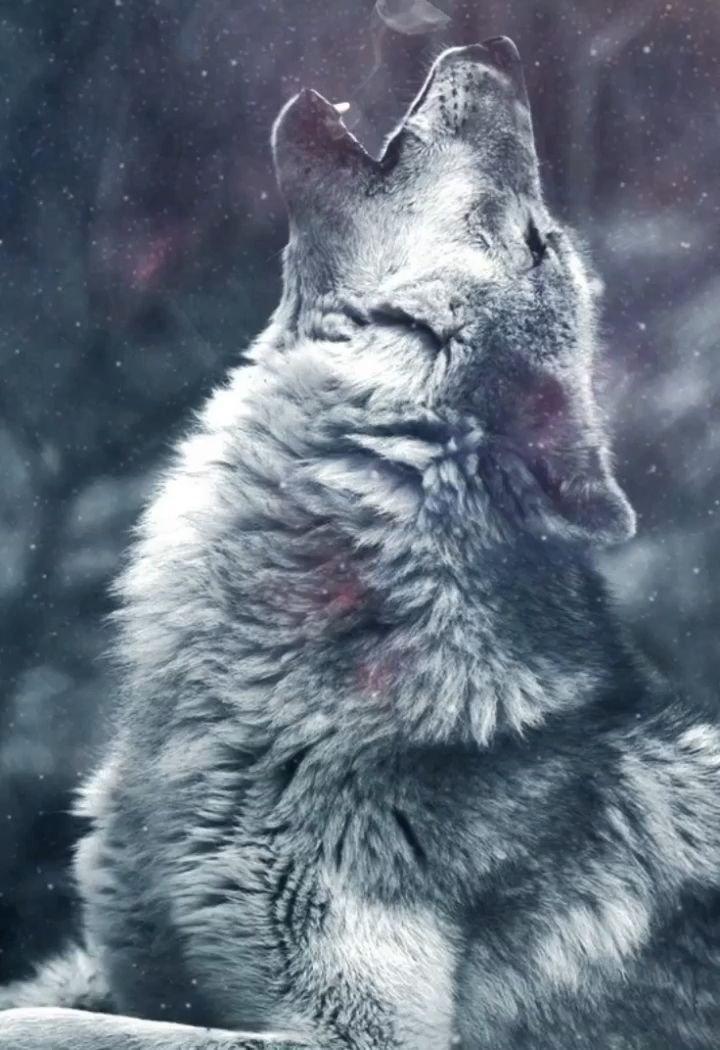 Wolf Howling Lone Wolf Baby Wolves Baby Foxes Bull Riding Hunting Outdoors Deer Red Wolves Doberman Pinscher Bass Fishing Wolf Dog Wolf Spirit Animal Wolf Love