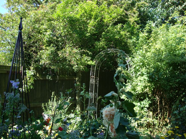 my lush potager just before the flowers arrive!