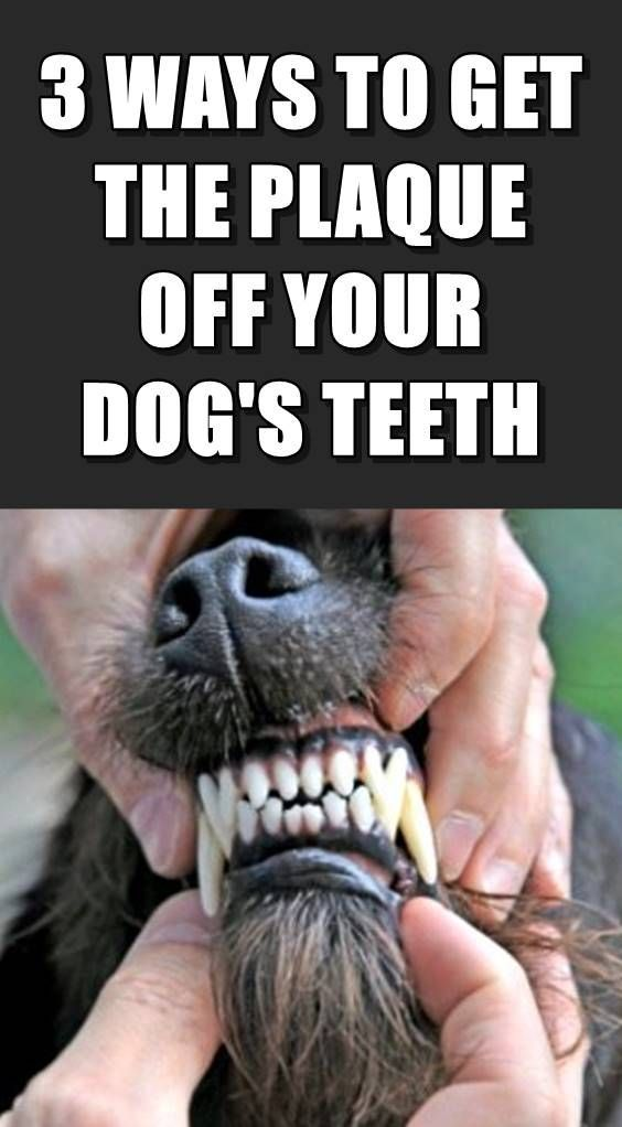 How To Get The Plaque Off And Clean Your Dog's Teeth