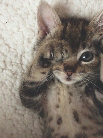 Ça pique les yeux ce matin... Bonne journée les ch'amis ! #chat