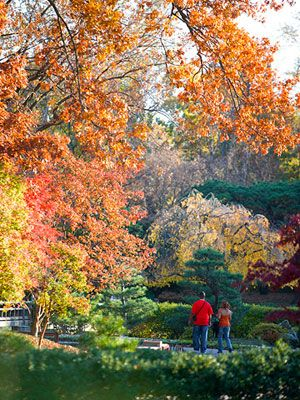 St. Louis: Missouri Botanical Garden. For more Great Midwest Spots to See Fall Color http://www.midwestliving.com/travel/interest/scenic-drives/fall-color/?page=2#page=1