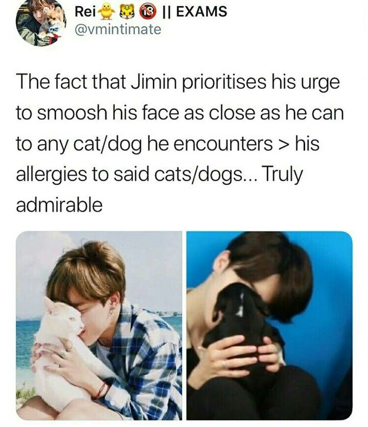 He Has Allergies Why Did No One Tell Me Omf I Thought He Had A Dog Too What Is This Bts Tweet Bts Funny Bts Memes