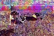 "New artwork for sale! - "" Dogs Jack Russel Sweet  by PixBreak Art "" - http://fineartamerica.com/featured/dogs-jack-russel-sweet-pixbreak-art.html"