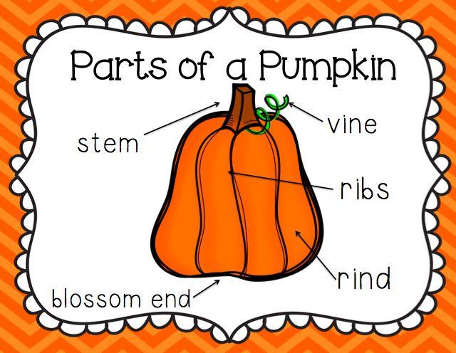 parts of a pumpkin (put up poster in the science area) pumpkinparts of a pumpkin (put up poster in the science area) pumpkin theme first grade, classroom, kindergarten