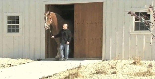 Può sembrare un cavallo normale, ma non lo è. Ecco perchè