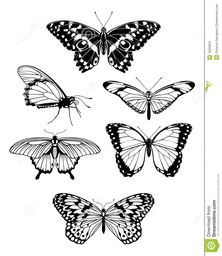 http://www.dreamstime.com/royalty-free-stock-photo-beautiful-stylised-butterfly-outline-silhouettes-image18392815