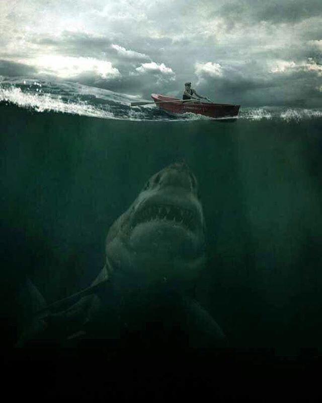 SHARK. ⚓ByDiver969⚓                                                                                                                                                                                 More
