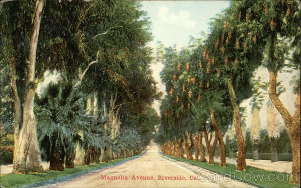 Scenic View Of Magnolia Avenue Riverside Ca Places I 39 Ve Been Things I 39 Ve Done Pinterest
