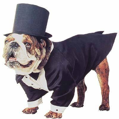 Our english bulldog Benjamin Pickles will be one of our ring bears and will need a grey tux of his own :)