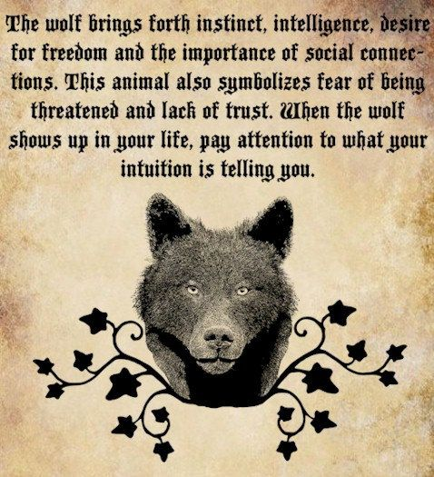 wolf Spirit animal clip art png file by DigitalGraphicsShop, $2.50