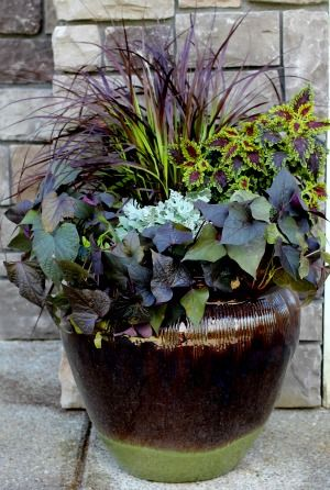 Sweet potatoe vines, coleus, fountain grass, and dusty miller.