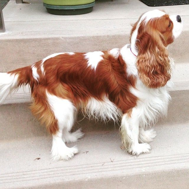 King George the cavalier - How's my profile? My right side is my best. What's yours?