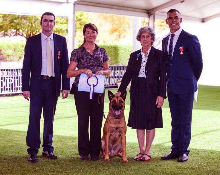 In Kennel Dog Training Gold Coast