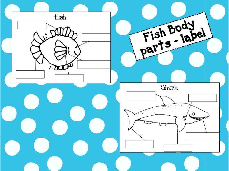 fish diagrams and labels diagrams pinterest. Black Bedroom Furniture Sets. Home Design Ideas
