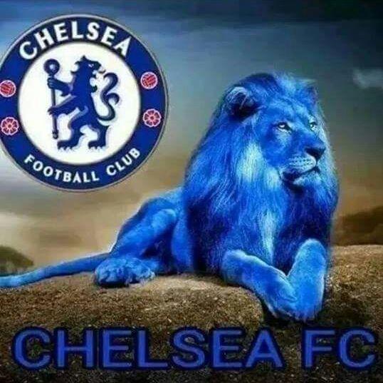 CHELSEA FC Lion