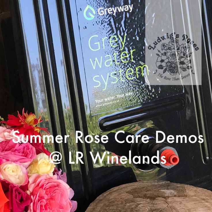 We have lined up the experts for this weekends SUMMER ROSE CARE demos. Learn rose architecting with Anja Taschner. Meet experts from FELCO, GREYWAY Greywater Systems, MAKHRO Sprays & LECCA Mulch! FREE  LR Winelands: Sat 20 Jan 10am & Sun 21 Jan 10h30  LR Cape Town Sat 20 Jan 2pm