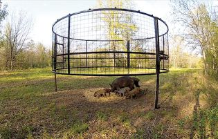 how to make a pig trap with rope