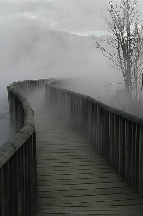 We'd crossed from gravel to a wooden walkway, so it was a bridge. Each measured tread across the weathered planking echoed in my ears. I couldn't tell if we were a few inches above a murky swamp or hundreds of feet above a sheer drop. A murky mist blurred the world beyond the railings and soon thickened into for that grew thicker and thicker.  ~INVISIBLE JOURNEY ~ Mary Buckham    @Found on vmburkhardt.tumblr.com