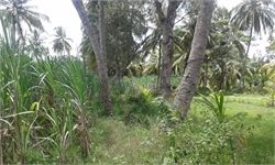 Agricultural Land For Sale in Srirangapatnam, 1 Acre - Price: Rs.70 Lac(s). Get All details of Agricultural Land in Srirangapatnam - 53002132