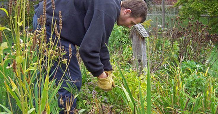 Herbicida hecho en casa con ácido cítrico y vinagre blanco. Retirar las malas hierbas es una de las tareas más comunes en el mantenimiento de jardines a las que tienen que enfrentarse los propietarios. Las malas hierbas no se ven a simple vista y pueden conseguir que áreas arregladas parezcan descuidadas. Hay una gran cantidad de herbicidas disponibles para limpiar tu jardín, pero sus ingredientes pueden ...