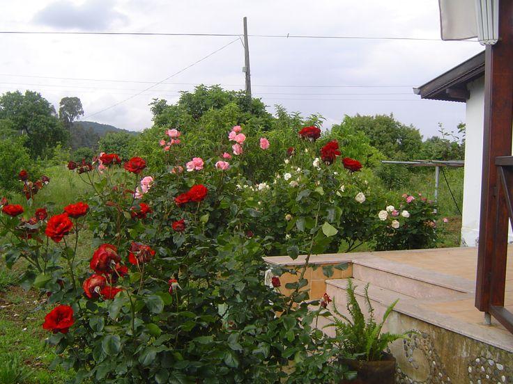 Bahçemde gül zamanı..