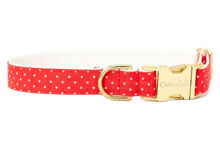 White Pindot on Red Dog Collar