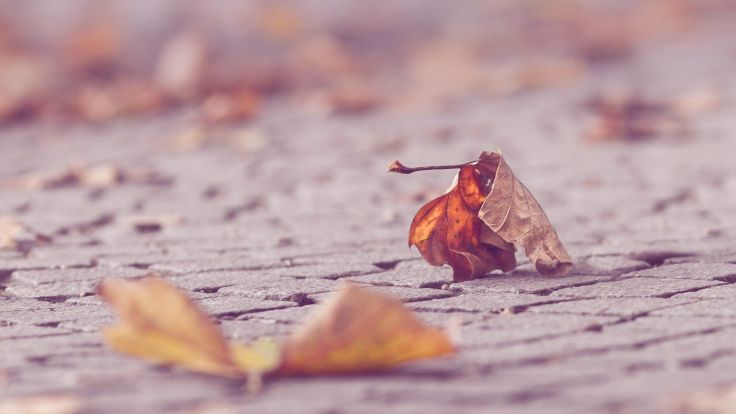 leaves depth of field wallpaper background