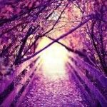 Inspired into Inner Peace. My journey with Purple  http://andreaputting.com.au/inspired-into-inner-peace/