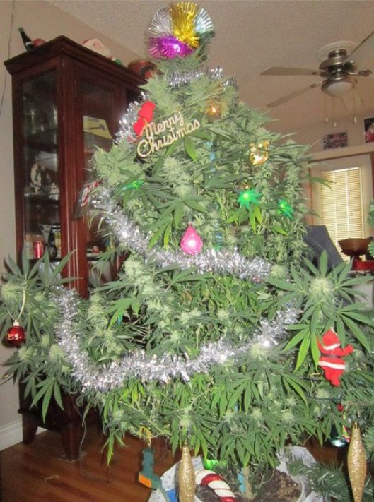 9 best Christmas Marijuana Stuff images on Pinterest | Merry ...