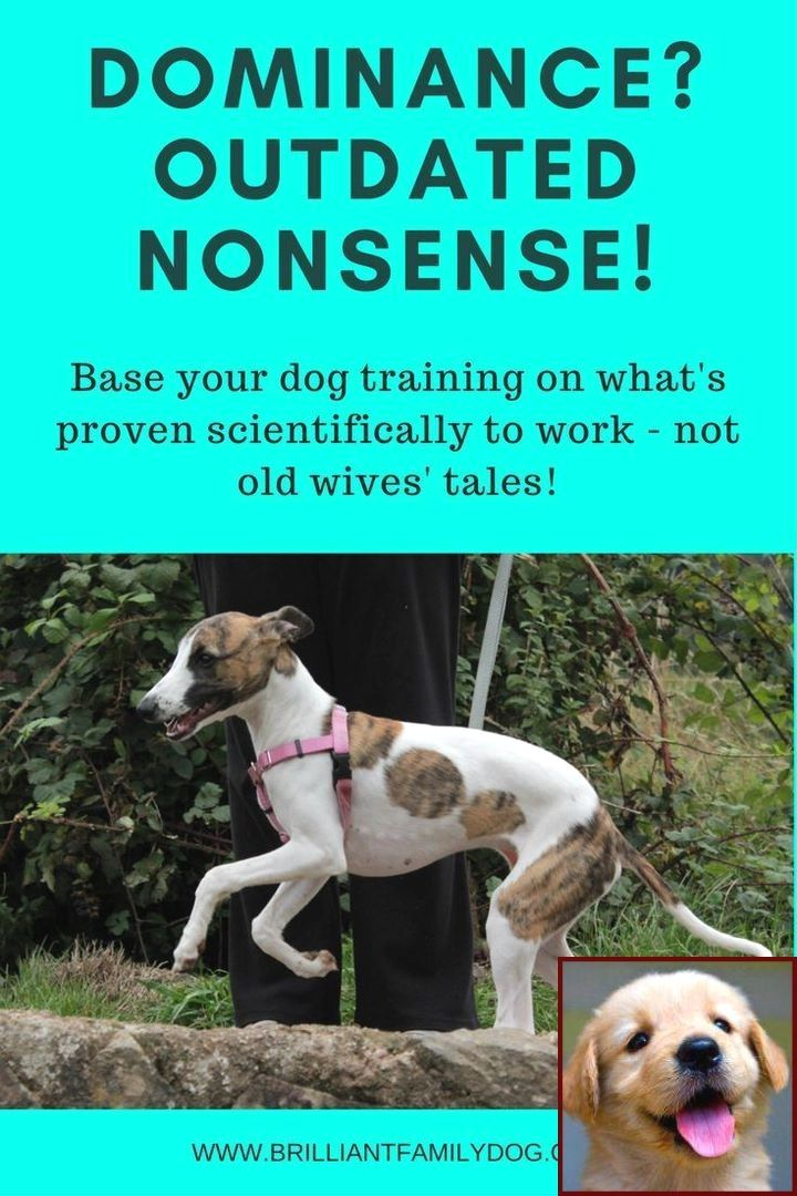 House Training A Boston Terrier Puppy And Dog Training Classes East End Glasgow Dog Behavior Problems House Training Puppies Dog Behavior