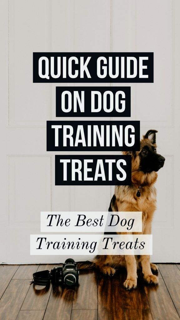 Dog Obedience Training Click The Picture For Lots Of Dog Care