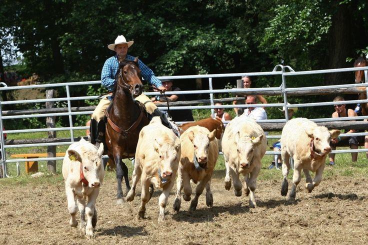 Ranč Cindyum, oľnočasové jazdenie na koňoch, jazdecká škola Zľava: 10%