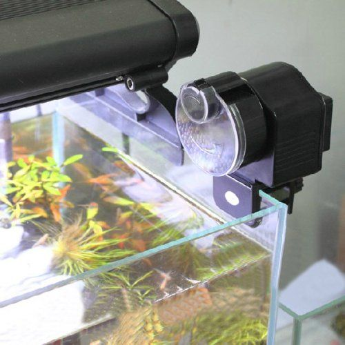 1000 ideas about small fish tanks on pinterest fish for Automatic betta fish feeder