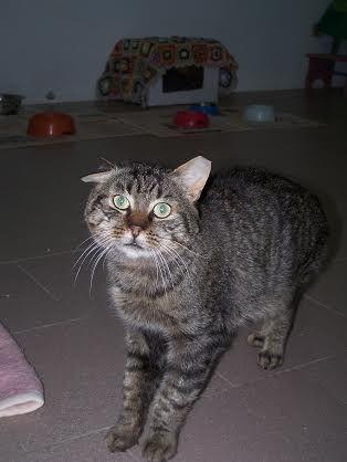 ADOTTATO :) GAS detto anche il gatto caldaia perché per molto tempo appena arrivato è stato nascosto sulla caldaia. Anziano, una casetta per lui...neanche dirlo...sarebbe un sogno. vive nella stanza degli anziani, stanza verde.