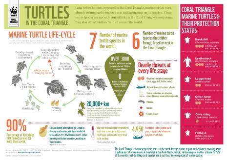 turtles!:  Internet Site,  Website, Life Cycle, Turtles Infographic, Web Site, Life Cycling, Marines Turtles, Sea Turtles, Coral Triangles