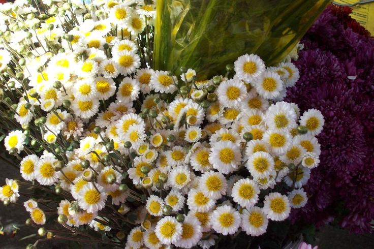 las infaltables flores
