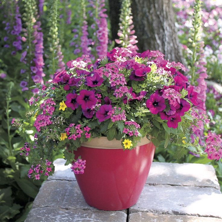 30 Best Container Gardening Images On Pinterest