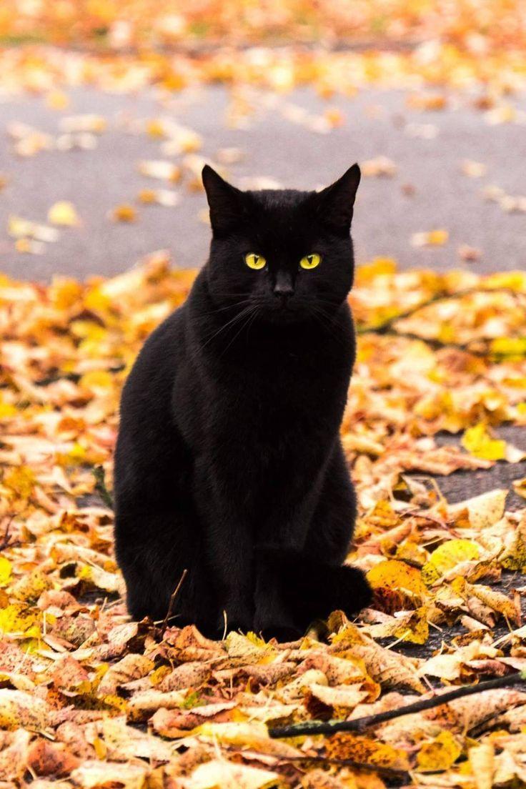"""cuteandadorable: """"Beleza Negra !! ❤❤"""" –   – Katzen"""