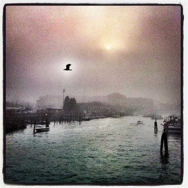 #venezia #alba #nebbia #gabbiano #cielo #sunrise #fog #seagull #sky