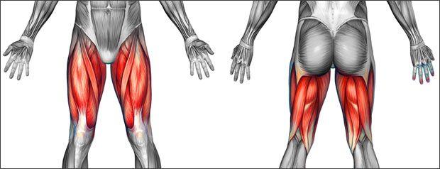 Thigh Pain & Thigh Injuries   Sportsinjuryclinic.net