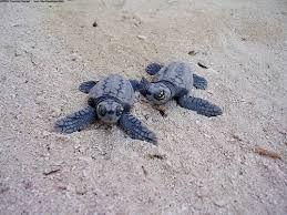 nem plüss teknősök szerintem