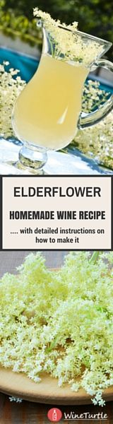 An ultimate guide on how to make elderflower wine with step-by-step instructions, and a recipe that will blow your socks off.