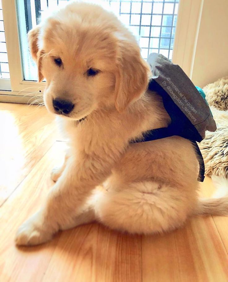 He Has A Backpack Cute Puppy Pictures Cute Baby Animals
