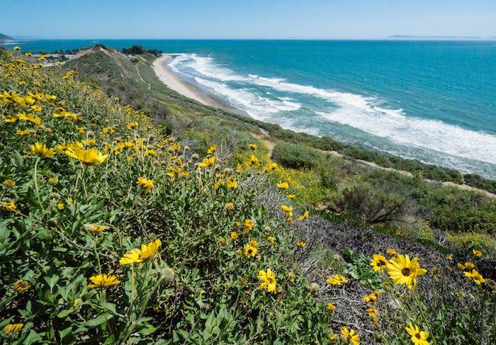 """This beautiful stretch of land on the Carpinteria Bluffs, now protected by the Land Trust for Santa Barbara County, is officially named """"The Rincon Bluffs Preserve."""" http://sbseasons.com/2018/02/land-trust-name-carpinteria-bluffs-iii-rincon-bluffs-preserve/ #SBNature  #SBnonprofits #SBOutside #Carpinteria #LandTrustforSBCounty #sbseasons #sb #santabarbara #SBSeasonsMagazine #CentralCoast #CoastalSeasons To subscribe visit sbseasons.com/subscribe.html"""