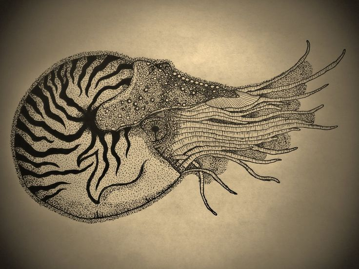 ... Tattoo on Pinterest | Shell Tattoos, Tattoos and Golden Ratio Tattoo
