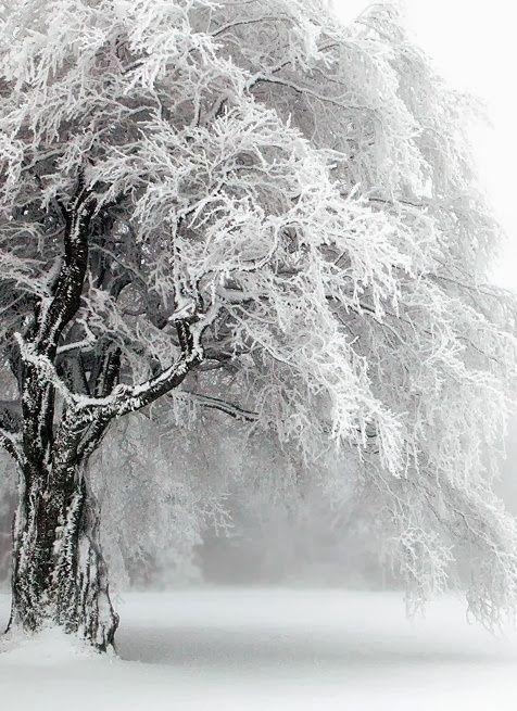 Trees (Beauty Landscapes Scenery)
