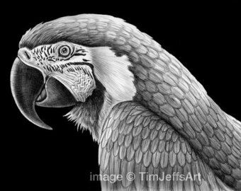 Illustrazione dell'inchiostro di grande gufo di TimJeffsArt