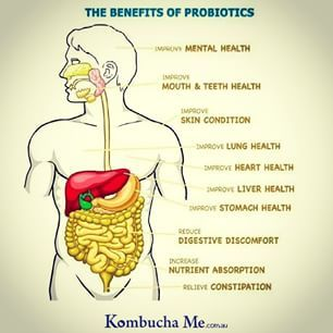 Fill your gut with a daily dose of probiotics! #probiotic #greatskin #healthychoices #wholesome #kombucha #holistic #digestion #cleanse #cleaneating #healthyteeth #drink #instafood #healthbenefits #dinner #lunch #breakfast #fresh #tasty #foodie #brew #delicious #foodpic #ferment #tea #raw        @kombuchame              Fill your gut with a daily dose of probiotics! #probiotic #greatskin #healthychoices #wholesome #kombucha #holistic #digestion #cleanse #cleaneating #healthyteeth ..